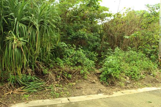 西表島 ジャングル入り口