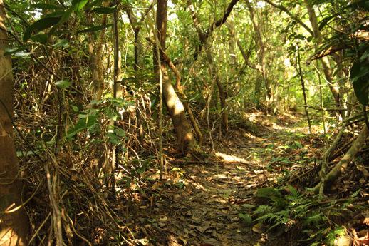西表島 ジャングル3
