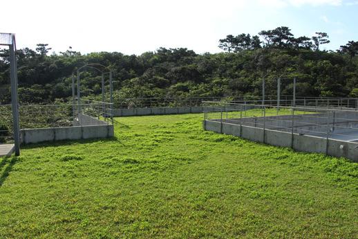 パイヌマヤ-屋上庭園