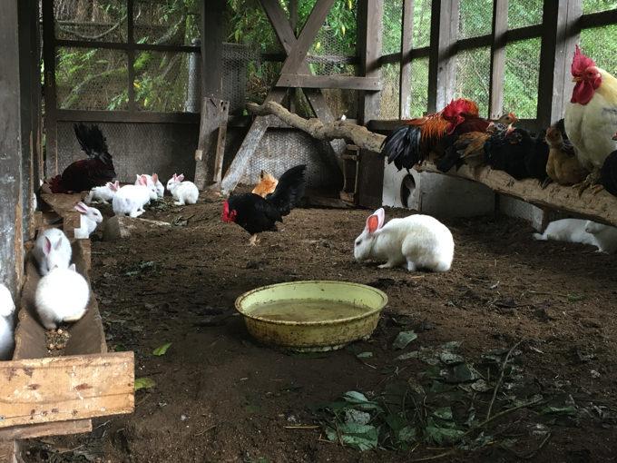 みたき園の飼育小屋2